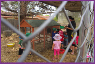 Kids and teacher are feeding the chickens