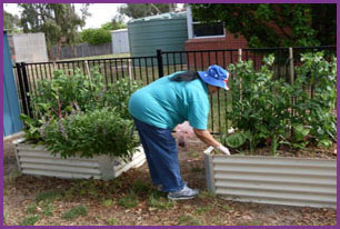 Teacher looks after the vegetable garden